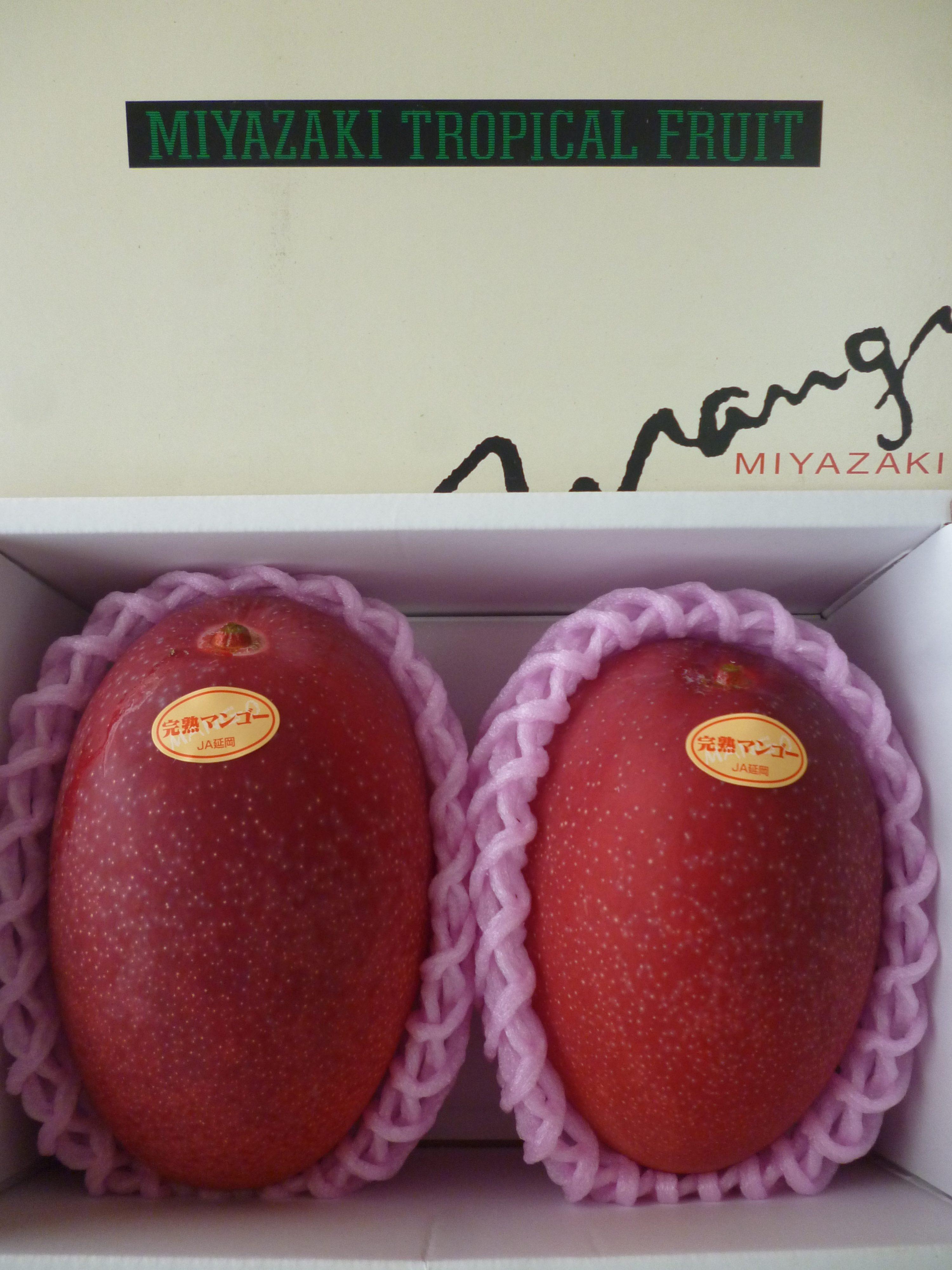 母の日、父の日のプレゼントに!<br /> 完熟マンゴ-4Lサイズ2玉入り